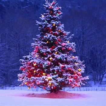 Harrogate Christmas Markets