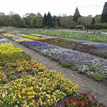 RHS Bridgewater Gardens