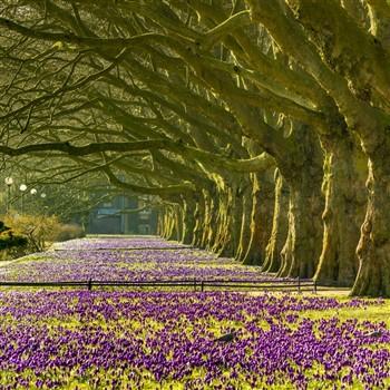 Spring into Harrogate